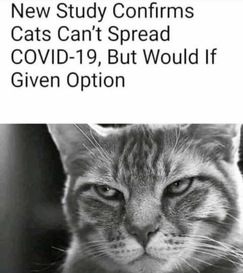 new-study-cats-cant-spread-covid-but-would-if-they-could.jpg