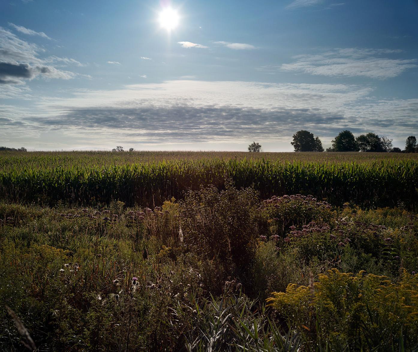 sun_field.jpg